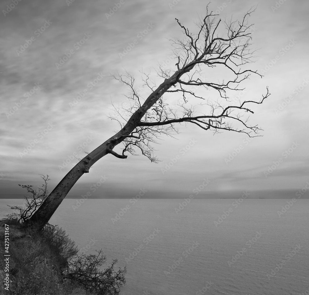 Fototapeta Drzewo z widokiem na morze