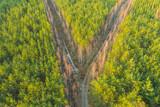 Fototapeta Na ścianę - Rozwidlenie leśnej drogi. Widok z drona.
