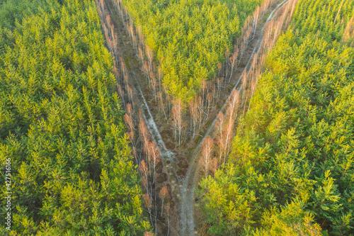 Obraz Rozwidlenie leśnej drogi. Widok z drona. - fototapety do salonu