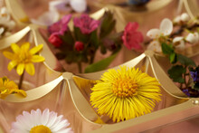 Coltsfoot, Lungwort, Common Daisy And Other Wild Spring Flowers In An Empty Box Of Chocolates