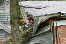Tree Falls Ripping Into The Side Of A House Destroying It