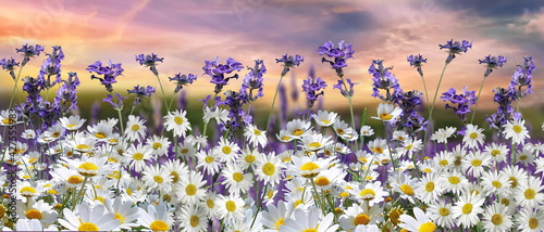 Photo blue sky dramatic clouds at gold sunset at sea wild flowers daisy field  seascap
