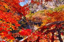 紅葉シーズンの山梨、甲府市にある昇仙峡の渓谷内から見た景観