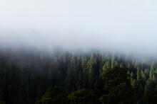 Bosque Del Ajusco, Ciudad De Mexico.