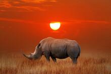 African Great Rhinoceros At Sunset In The Savannah. Africa. Tanzania. Serengeti National Park.