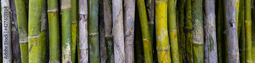 Fotografia Bamboo forest background