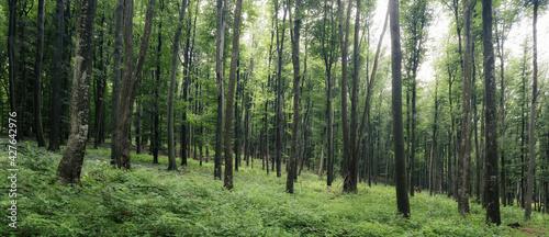 panorama with lush vegetation in woods landscape - fototapety na wymiar