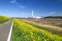 満開の菜の花咲く江戸川土手のサイクリング道路とクリーンセンター風景