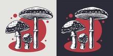 Mushroom Picking Of Amanita. Poison Mushrooms Or Fungus Inedible Fly Agaric. Nature Fungi Fly-agaric