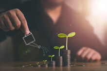 Growing Money, Plant On Coins, Business Finance And Saving Money Investment Concept, Businessman Is Watering The Plants On Stacking Coins.
