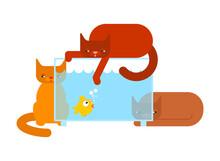 Cat And Aquarium. Small Fish Hiding From Cat