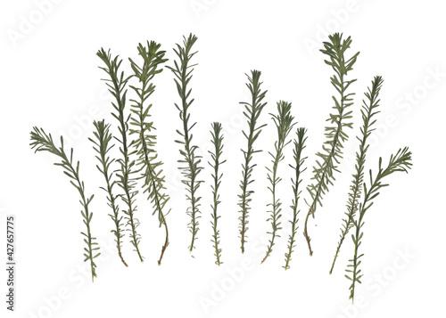 Fototapeta Herbarium