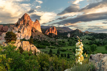 A Yucca Cactus In Bloom, Rock Spires Jolting Out Of The Ground To Create A Mountain Ridge In A Hilly Terrain Covered With Green Trees And Grass, Garden Of The Gods, Colorado Springs, Colorado