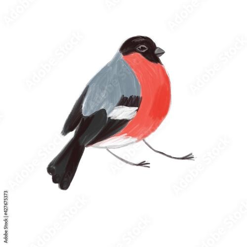 Papel de parede illustration with bird, fat bullfinch