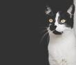 Czarno biały kot na ciemnym tle