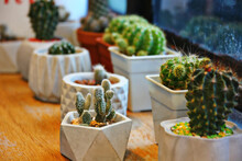 Cactus And Succulents In White Pot Decoration On Wood Floor In Plant Shop