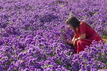 Woman Standing By Purple Flowering Plants On Field