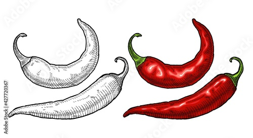 Valokuva Whole pepper chilli. Vintage hatching color illustration.