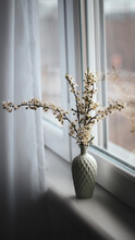 Close-up Of White Flowers On Window Sill
