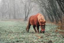 Full Length Of Pony Grazing On Field