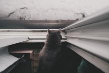 Top Down View Of Cat Looking Out Screen Door.