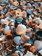 The Seashells Of The Black Sea