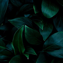 Full Frame Of Green Leaves Texture Background.
