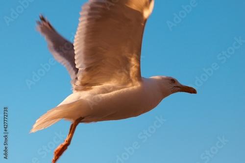 Fotografia Seagull Starts