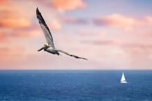 Pelicans Flying Near The Beach With Ocean