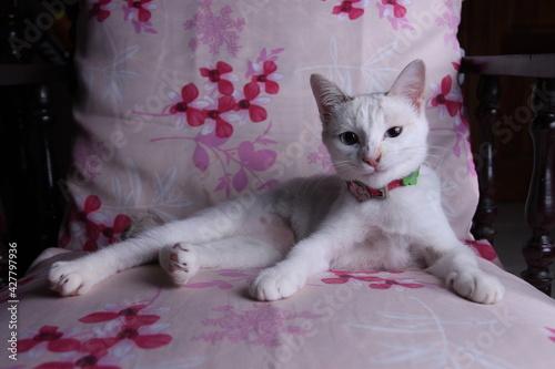 Fototapeta premium Portrait Of Cat Lying On Bed