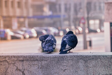 Pigeons Perched On A Concrete Wall On A Street