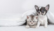 Tiny Chihuahua puppy and tabby kitten sit  together under white warm blanket on a bed at home. Empty space for text