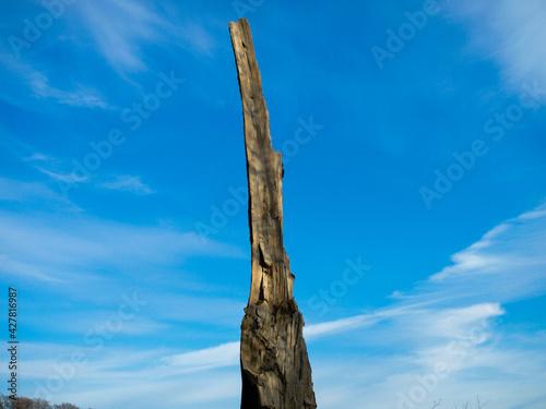 Fotografie, Obraz Spitze eines kaputten Baumes