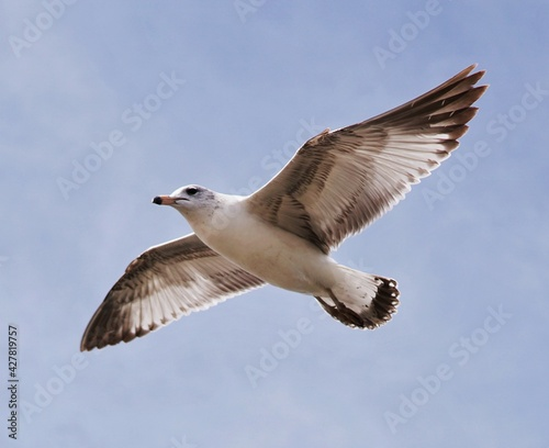 Photographie Low Angle View Of Seagull Flying In Sky
