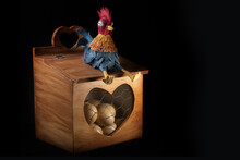 Funny Rooster Sitting On An Egg Holder