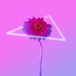 canvas print picture - Minimal retro wave concept of daisy flower. Futuristic neon background.