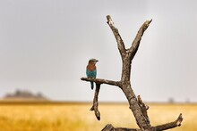 Close-up Of Bird Perching On Branch Against Sky