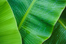 Full Frame Shot Of Water Drops On Banana Leaf