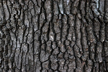 Tree Bark With A Pronounced Texture, Dark Mood Photo