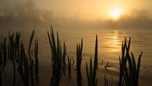 Bord De Loir Brumeux à L'heure Dorée Face Au Soleil Avec De La Végétation Au Premier Plan