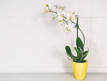 A Little Flower Pot With Orchid In Front Of Gray Wall