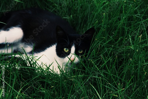 Fototapeta premium Close-up Of Black Cat On Grass