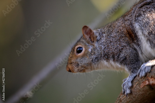 Close-up Of Squirrel