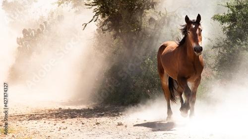 Obraz na plátně View Of Horse Galloping On Land