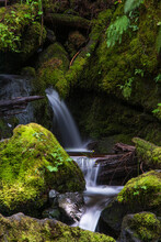 Scenic View Of Waterfall In Quinault Rainforest