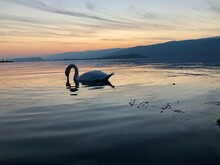 View Of Swan In Lake Against Sunset Sky