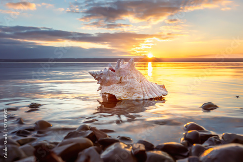conch sea shell laying at the beach at sunset Fototapete