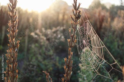 Billede på lærred Spinnennetz am Morgen mit Tautropfen