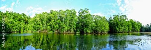 Sur la rivière Sierpe, péninsule d'Osa dans le Sud du Costa Rica Fototapet