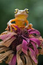 Golden Tree Frog Standing In Pink Flowers
